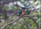 鳥集*:_MG_1411.jpg