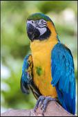鳥集*:_MG_0005.jpg
