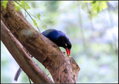 鳥集*:_MG_4877.jpg