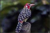 鳥集*:_MG_1246.jpg