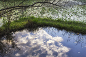 關渡自然公園:_MG_0734-1.jpg