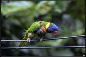 鳥集*:_MG_1245.jpg