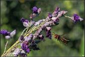 紫色:_MG_4685.jpg
