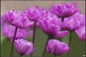 紫色:_MG_9838.jpg