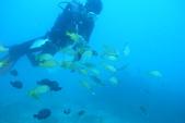 2012 潛水活動:M1064680.JPG