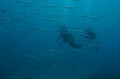 2012 潛水活動:DSC04178.JPG
