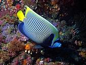 春潛:獨立礁 拍超久只選一張.JPG