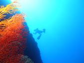 2011 潛水活動:是誰.JPG