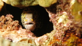 2012 潛水活動:DSC09662.JPG