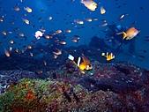 春潛:山海 小魚礁04.JPG