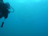 2012 潛水活動:IMAG0706.JPG