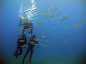 南青潛水 五月活動 :梭魚群