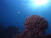2011 潛水活動:光.JPG