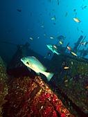 墾丁砂島沉船:一下水就遇到大鱸魚.JPG