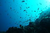 2012 潛水活動:DSC05039.JPG