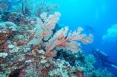 藍色海域 綠島:DSC07365.JPG