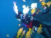 2011 潛水活動:餵魚.JPG