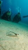2012 潛水活動:DSC00112.JPG