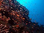 春潛:獨立礁下潛繩下.JPG