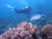 2011 潛水活動:藍鰭鰺.JPG