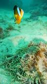 2012 潛水活動:DSC09482.JPG