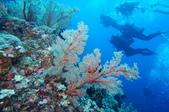藍色海域 綠島:DSC07367.JPG