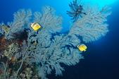 2012 潛水活動:DSC05348.JPG