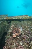 2012 潛水活動:DSC04753.JPG