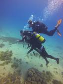 南青潛水 四月 活動照:很棒的能見度