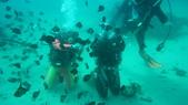 2012 潛水活動:DSC09511.JPG