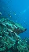 2012 潛水活動:DSC00547.JPG