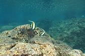 2012 潛水活動:DSC05695.JPG