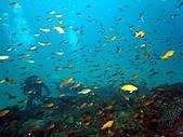 春潛:山海 小魚礁02.JPG