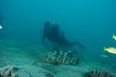 2012 潛水活動:DSC05788.JPG