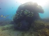 南青潛水 四月 活動照:餵魚區2號點