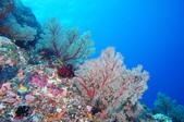 藍色海域 綠島:DSC07354.JPG