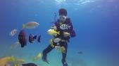南青潛水 四月 活動照:在水中央餵魚也有一番趣味唷