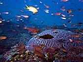 春潛:山海 小魚礁03.JPG
