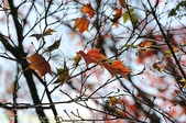 2014楓石門 野餐日 (桃園石門水庫 南苑公園) 2014/12/13:IMG_9823.jpg