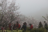 淡水楓樹湖古道木蘭花辛夷 20150225 :IMG_4088.jpg