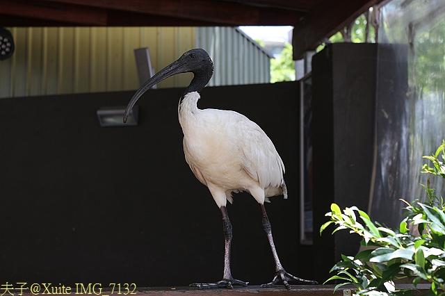 澳洲布里斯本-南岸公園 South Bank Parklands 2013/02/06:IMG_7132.jpg