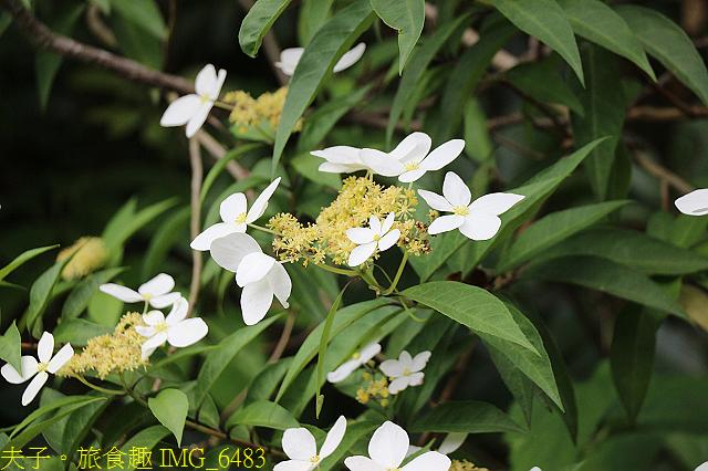 台北市內湖區碧湖公園 20210317:IMG_6483.jpg
