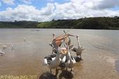 澳洲 Catch-A-Crab 黃金海岸翠德 (Tweed) 河捕蟹探險之旅 2013/02/07:IMG_7577.jpg