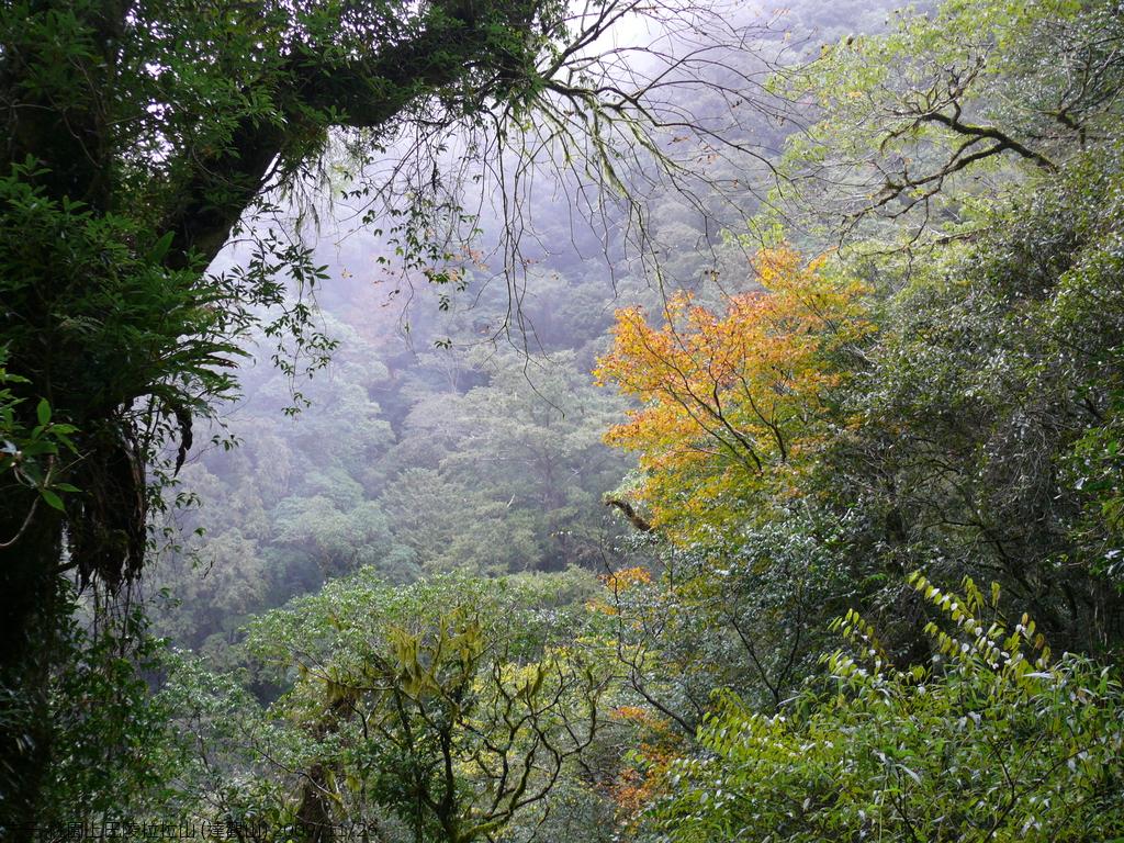 桃園上巴陵拉拉山 (達觀山) 2009/11/26 :P1050601.JPG