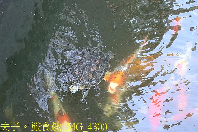 IMG_4300.jpg - 台中大甲  龜鶴塘 20200620