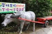2015上山採藥趣 山藥高峰會 - 雙溪老街遊 (平林休閒農場)  20151003:IMG_7003.jpg