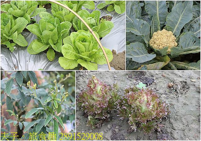 2891529008.jpg - Lipahak 三峽野菜農園 20201114