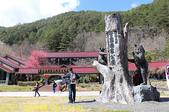 2021年 武陵農場 山櫻花、紅粉佳人 繽紛綻放 20210214:IMG_4420.jpg
