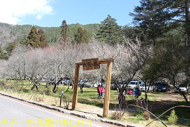 2021年 武陵農場 山櫻花、紅粉佳人 繽紛綻放 20210214:IMG_4421.jpg