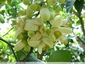 我每年中秋吃柚子, 柚子花第一次看:P1020325.JPG